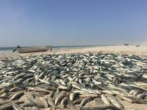 Traditionelles Fischen in Oman Lizenzfreie Stockfotografie