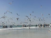 Traditionelles Fischen in Oman Lizenzfreies Stockfoto