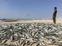 Traditionelles Fischen in Oman Stockfotografie