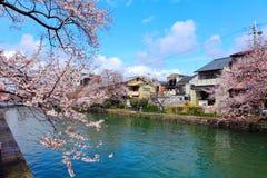 Kyoto holzhaus und kirschbl te lizenzfreies stockfoto for Traditionelles haus japan