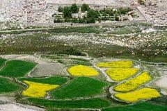 Traditionelles tibetanisches Dorf: im Vordergrund gerundete Felder der Vegetation grün und gelb, hinter einer eingezäunten Einsch Stockbild