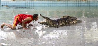 Traditionellt för den Thailand showen av krokodiler Royaltyfria Bilder