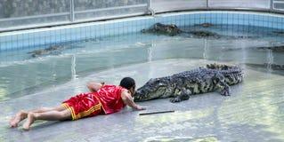 Traditionellt för den Thailand showen av krokodiler Arkivbild