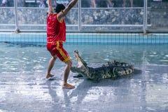 Traditionellt för den Thailand showen av krokodiler Royaltyfri Bild