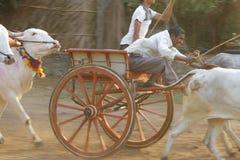 Traditionellt lopp för oxevagn royaltyfri bild