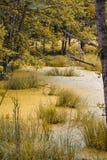 Traditionellt stillsamt gulaktigt sankt område i skogen royaltyfri fotografi
