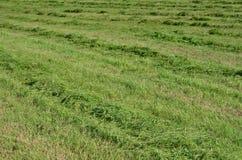 Traditionellt torrt gräs Fotografering för Bildbyråer