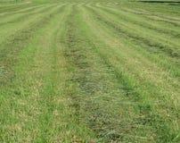Traditionellt torrt gräs Royaltyfria Foton