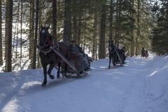Traditionsgemäß Pferdeschlittenfahrt in den polnischen Bergen Stockbild