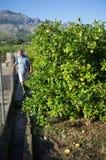 Tradtional irrigation Royalty Free Stock Photo