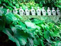 Tradyci Japonia ogród, Zen ogród Zdjęcie Stock