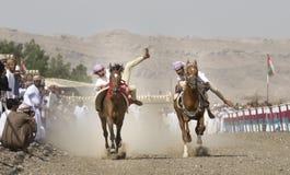 Tradycyjna omani końska rasa Zdjęcie Stock