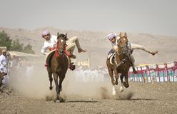 Tradycyjna omani końska rasa Zdjęcia Royalty Free