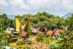 Tradycyjna wioska, Taniec Toraja Zdjęcie Royalty Free
