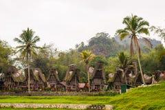 Tradycyjna wioska, Taniec Toraja Fotografia Stock