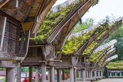 Tradycyjna wioska, Taniec Toraja Obraz Royalty Free