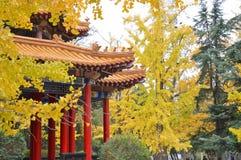 Tradycyjni Chińskie pawilon przy parkiem w jesieni obraz royalty free