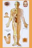 Tradycyjni Chińskie akupunktury mapa Obraz Stock