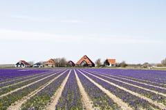 Tradycyjni domy wiejscy w Holandia obrazy stock