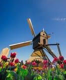 Tradycyjni Holenderscy wiatraczki od kanału w Rotterdam, głęboki nieba astrophoto Rzędy czerwoni tulipany w Holandia Obrazy Royalty Free
