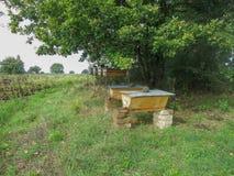 Tradycyjni pszczoła roje w Włochy Zdjęcie Stock