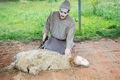 Tradycyjny barani shearing w Maroko zdjęcie royalty free