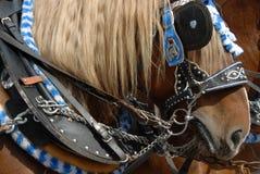 tradycyjny bavarian koń Zdjęcia Stock