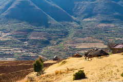 Tradycyjny gospodarstwo rolne w Lesotho Fotografia Stock