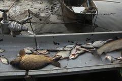 Tradycyjny jesieni masy połów w Południowej cyganerii, republika czech Obrazy Royalty Free