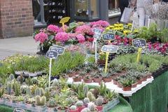 Tradycyjny kwiatu rynek w Jork Obraz Stock