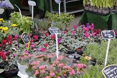 Tradycyjny kwiatu rynek w Jork Fotografia Stock