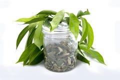 Tradycyjny Malajski ziele Fotografia Stock