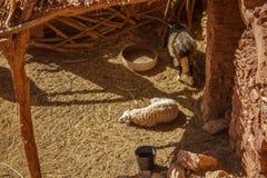Tradycyjny podwórze w forcie Ait Ben Haddou Zdjęcia Stock