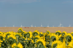 Tradycyjny rolnictwo stawia czoło nową technologię gdy ten słonecznikowy pole przegapia wiatrowego gospodarstwo rolne w Południow zdjęcie royalty free