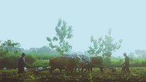 Tradycyjny rolnik w Indonezja zdjęcie stock