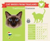 Tradycyjny Syjamskiego kota trakenu infographics royalty ilustracja