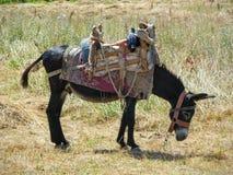 Tradycyjny wyposażający osioł Zdjęcie Royalty Free