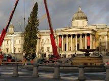 Trafalgar Christmas Tree planting royalty free stock photo
