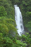Trafalgar Falls in Dominica ,Caribbean Islands Royalty Free Stock Photography