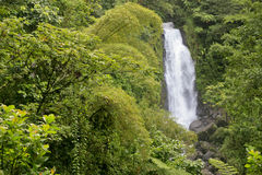 Trafalgar Falls, Dominica. Trafalgar Falls, Morne Trois Pitons National Park, Dominica. This park is a UNESCO Heritage Site Stock Photography
