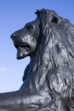 Trafalgar Lion portrait. Close up of one of the bronze lions at Trafalgar Square, London, England Royalty Free Stock Images