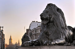 Trafalgar Square. Lion sculpture at Trafalgar Square, London, England. With Big Ben in the background Royalty Free Stock Images