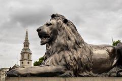Trafalgar Square Barbary lejon på grunden av Lords Nelsons kolonn, London, England, UK Arkivbilder