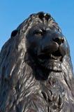 Trafalgar Square lejon Royaltyfri Foto
