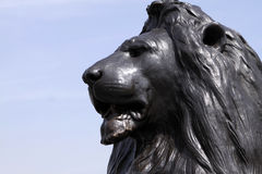 Trafalgar Square Lion. Close up of one of the bronze lions at Trafalgar Square, London, England Royalty Free Stock Photos