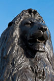 Trafalgar Square Lion. Lion at the base of Nelson's Column at Trafalgar Square in London, England (against a blue sky Royalty Free Stock Photo