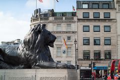Trafalgar Square Lion. London, UK - May 23rd, 2015: closeup photo of one of the four lion statues in Trafalgar Square, with London red buses moving in the Royalty Free Stock Photos