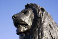 Trafalger Lion stock photo