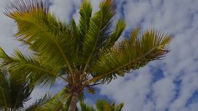 Traffic Cameras on the beach. View of palm trees from below, blue sky stock video