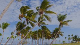 Traffic Cameras on the beach. View of palm trees from below, blue sky stock footage
